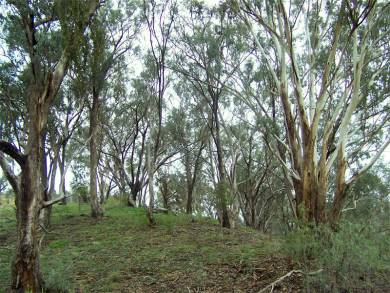 Using eucalyptus oil around the home