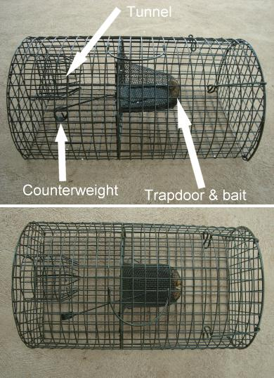 how to set up a rat trap