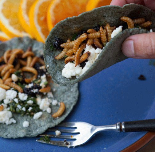 mealworm-taco